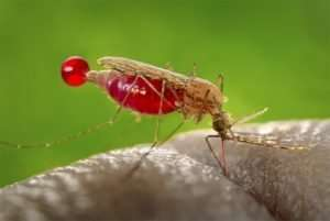 Protección contra insectos. 1000 Remedios: ¿qué es realmente eficaz?